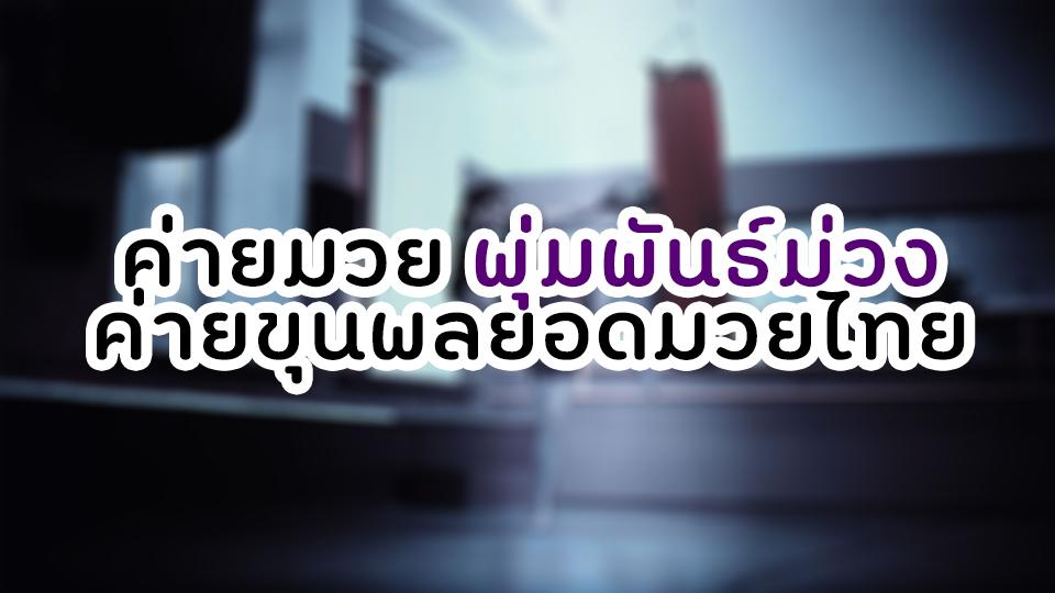 ค่ายมวย พุ่มพันธ์ม่วง ค่ายขุนพลยอดมวยไทย